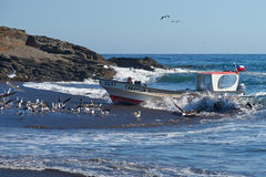 Fishing Boat Coming Ashore with the Catch Royalty Free Stock Images