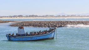 Fishing boat and cormorants Stock Images