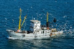 Fshing boat surrounded by seagulls, in Russia. Royalty Free Stock Image