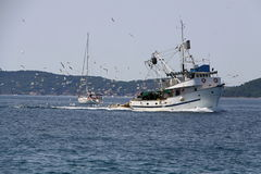 Fishing boat. A fishing boat followed by the bevy of seagulls stock photos
