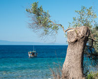 Fishing boat and Olive tree Stock Photos