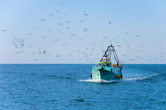Fishing boat returns home after a good catch. A fishing boat returns to port accompanied by a flock of seagulls Royalty Free Stock Photos