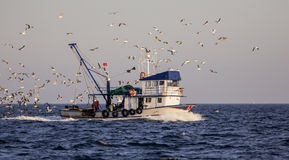 Fishing Boat with Sea Gulls Royalty Free Stock Photography