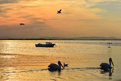 Fishing boat on the sea at sunset. Pelicans and seagulls swimming on the sea. Royalty Free Stock Images