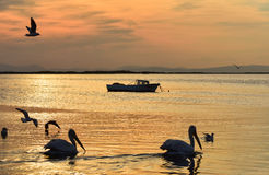 Fishing boat on the sea at sunset. Pelicans swimming and seagulls flying on the sea. Stock Photography