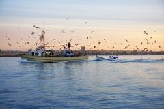 Fishing boat seagull on sunset sunrise Stock Photos