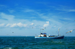 Fishing boat and seagulls. Such boats make fishing tours for herring and cod in a strait of Kattegatt, between Sweden and Denmark Royalty Free Stock Images