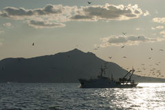 Fishing boat with seagulls Royalty Free Stock Photo