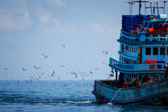 Fishing boat and seagulls. Royalty Free Stock Photography