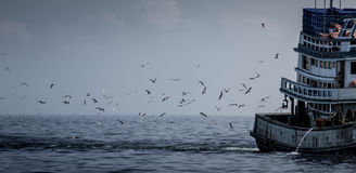 Fishing boat and seagulls. Royalty Free Stock Photo