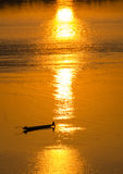 Fishing boat in the setting sun on Mekong River Stock Photos