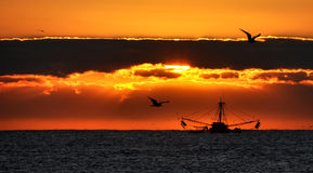 Fishing boat at sunrise. A lone fishing boat surrounded by seagulls at sunrise off the coast of Florida Stock Photos