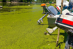 Fishing boats beached on overgrown river with duckweed. Stock Photos