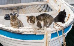 Fishing boats and big cats Stock Photography
