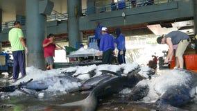 Fishing boats docked Chenggong Fishing Harbor remove fishing goo stock footage