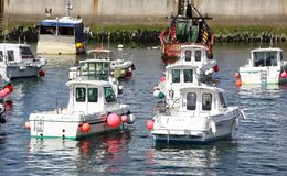 Fishing Boats in the harbour. A small fleet of fishing boats in the harbour Stock Image