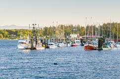 Fishing Boats in Harbour Warmly Lit by a Setting Sun. View of a Fishing Harbour at Sunset. a Forested Coast is Visible in Background. Sooke, BC, Canada stock photos