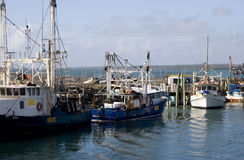Fishing boats in Hervey Bay royalty free stock photo