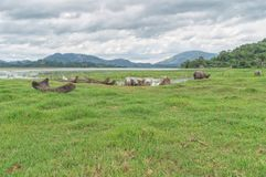 Fishing boats, hollowed out entirely from the trunk of a tree. On the shore of a lake near the settlement of mountain khera mnngi , Daklak province, Vietnam Royalty Free Stock Photo