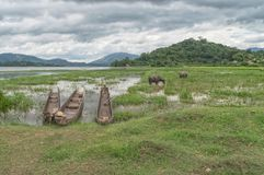 Fishing boats, hollowed out entirely from the trunk of a tree. On the shore of a lake near the settlement of mountain khera mnngi , Daklak province, Vietnam Royalty Free Stock Image