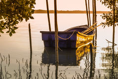 Fishing boats moored in the mangroves. Royalty Free Stock Images