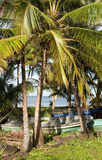 Fishing boats  palm tree Caribbean Sea  Big Corn Island Nicaragu Royalty Free Stock Photography