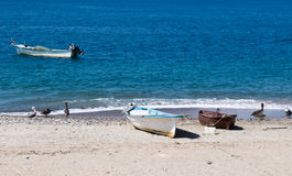 Fishing boats and Pelicans on the beach Royalty Free Stock Photo