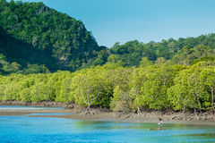 Fishing boats in sea and mangrove forest of Thailand Stock Photography