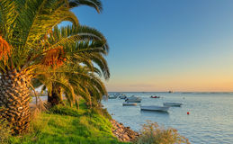 Fishing boats on the sea, palm trees on the beach. Royalty Free Stock Photography