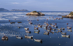 Fishing boats on the sea Stock Photography
