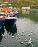 Fishing boats and seagulls, Isle of Skye. Stock Photography