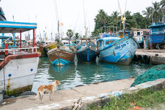Fishing boats in Tangalle port. TANGALLE, SOUTHERN PROVINCE, SRI LANKA, ASIA - DECEMBER 20, 2014: Colorful wood fishing boats moored on December 20, 2014 in Royalty Free Stock Image