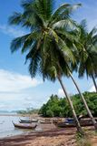 Fishing boats under palmtrees Royalty Free Stock Images
