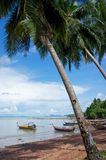 Fishing boats under palmtrees Stock Photo
