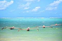Fishing boats in Zanzibar Stock Images