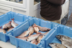 Ready for the auction. A fishing boxes ready for the auction Stock Images