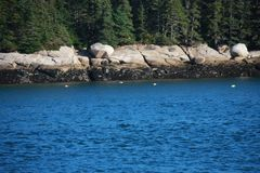 Fishing buoys resting on the ocean along the rocky shore in Corea, Maine royalty free stock photography