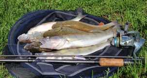 Fishing catch on the grass and fishing gear Royalty Free Stock Photos
