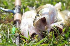 Fishing catch Stock Photo