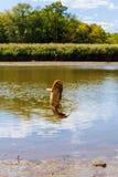 Fishing caught catfish Stock Photo
