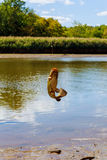 Fishing caught catfish Stock Image