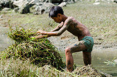 Fishing in children. In a summer, a few cattle children free inside a will soon dry up and touch the fish Stock Photo