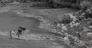 Fishing in children. Summer, a few cows in children in the dry river fishing collective insiden Royalty Free Stock Photography