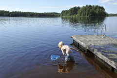 Fishing with a collection bag. Young boy looking for fish and insects in a lake with a collection bag Royalty Free Stock Images