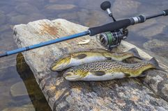 Fishing. Caught brown trout fish and spinning tackle on river stone royalty free stock photo
