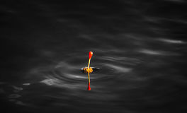 Fishing at dark. Fishing floater in dark water royalty free stock photo