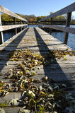 Fishing Dock in the Autumn Stock Photography