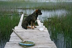 Fishing and a dog. The bridge on lake in a province. On the bridge the dog sits Stock Photography