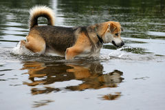 Fishing Dog Stock Images