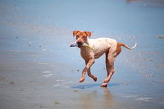 Fishing Dog Royalty Free Stock Images